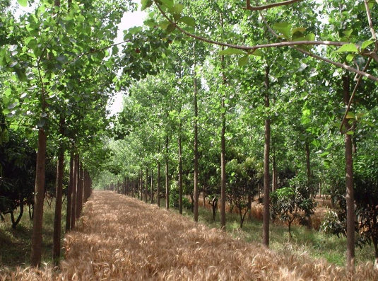 Investissons dans l'agro-écologie !
